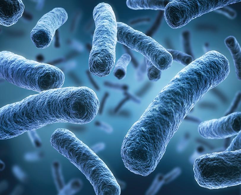 Legionellen Bakterien in der Umwelt